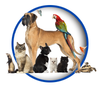 PawPrints Pet Sitters Pet Services