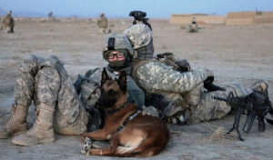 MilitaryDogs2