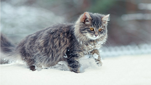 WinterCat2